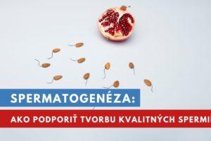 spermatogenéza
